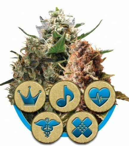 Medical Mix (Royal Queen Seeds)