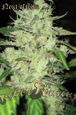 Next Of Kin (Super Strains)