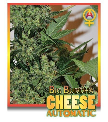 Big buddha seeds coupon