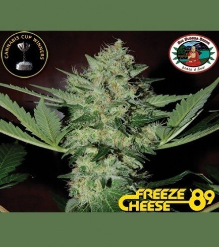 Freeze Cheese '89 (Big Buddha Seeds)