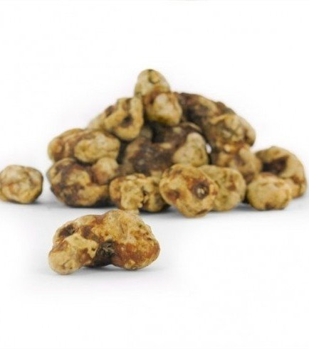 Magic Truffles Tampanensis, 15 grammes
