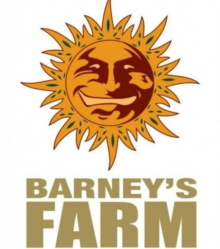 Peyote Critical (Barney's Farm)