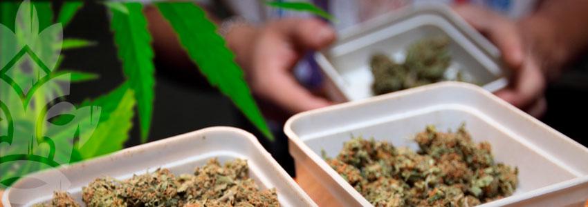 Vendre Du Cannabis