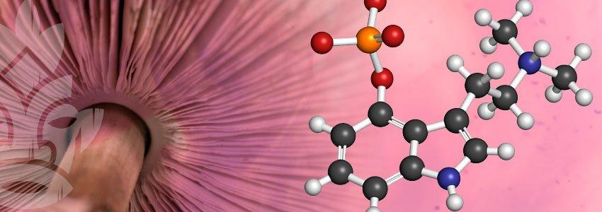Psilocybine élément chimique