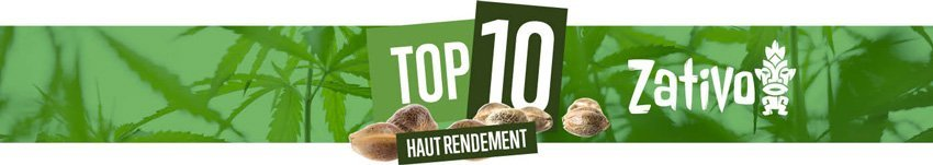 Top 10 Haut Rendement