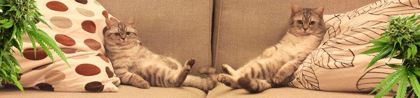Cloué au canapé