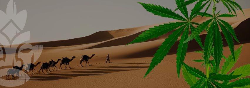 Le hasch en Arabie