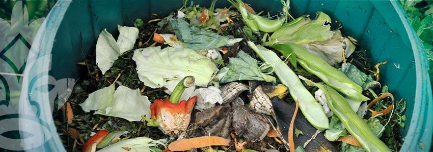 Comment Préparer Du Thé De Compost Et Des Apports Liquides Riches En Enzymes