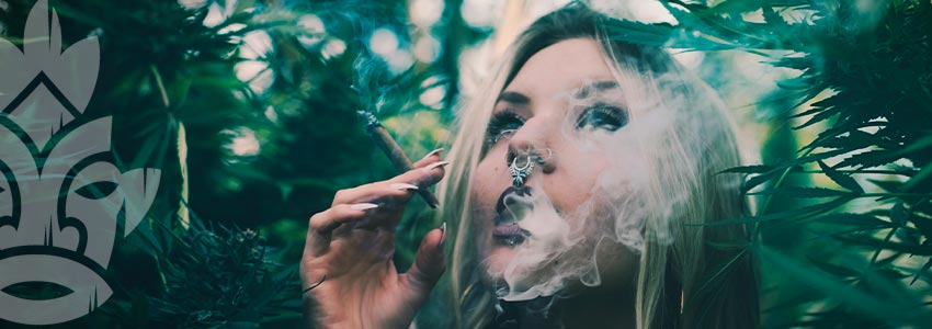Pourquoi Devriez-vous Fumer De La Weed Avec Un Faible Taux De Thc ?