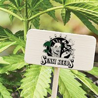Consulter le catalogue complet de Sensi Seeds