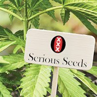 Consulter le catalogue complet de Serious Seeds