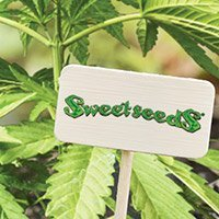 Consulter le catalogue complet de Sweet Seeds