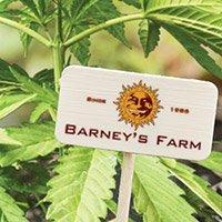 Consulter le catalogue complet de Barney's Farm