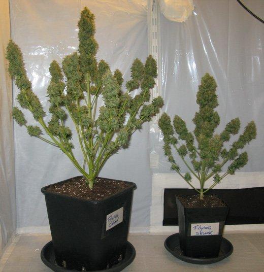diffrentes tailles de pots - Grande Plante Exterieur En Pot