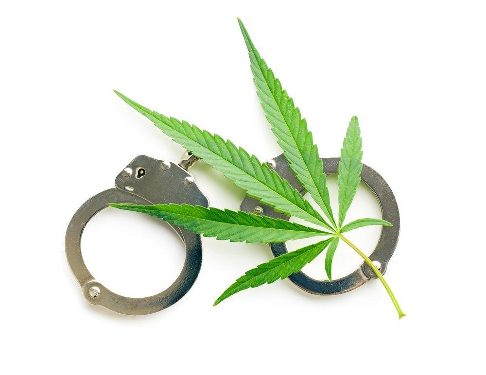 8 Raisons De Se Faire Arreter Pour Culture De Cannabis Zativo