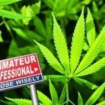 Top 10 Des Erreurs De Débutant Dans La Culture Du Cannabis