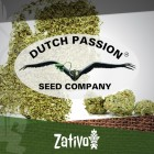 Introduction : 7 Nouvelles Variétés De Dutch Passion