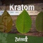 L'histoire Du Kratom