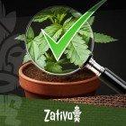 8 Conseils Pour Reconnaître Du Bon Cannabis