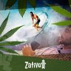 Les Différents Types De Cannabis Et Leurs Effets