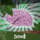 Comment L'Ayahuasca Affecte-T-Il Votre Cerveau ?