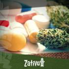 Le cannabis est-il la réponse à la résistance antibiotique ?