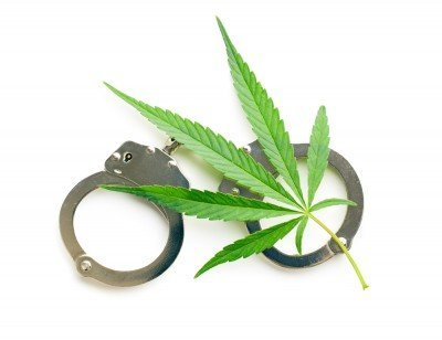 8 raisons de se faire arrêter pour culture de cannabis