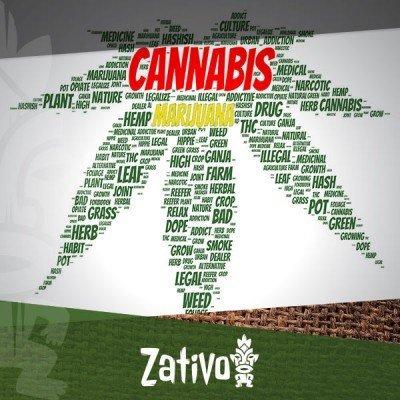 Pourquoi Le Cannabis Est Aussi Appelé Marijuana ?