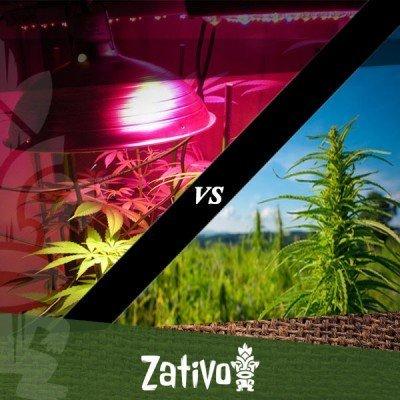Culture du cannabis en intérieur ou extérieur: les différences clé
