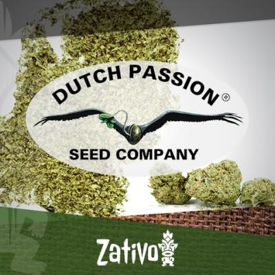 Introduction : 7 Nouvelles Variétés De Dutch Passion