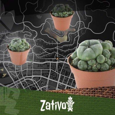 Trouvez Les Cactus Peyotl Dans GTA 5