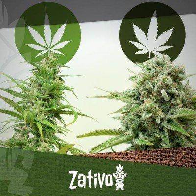 La différence entre Cannabis Indica et Sativa