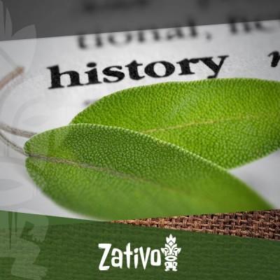 L'Histoire De La Salvia