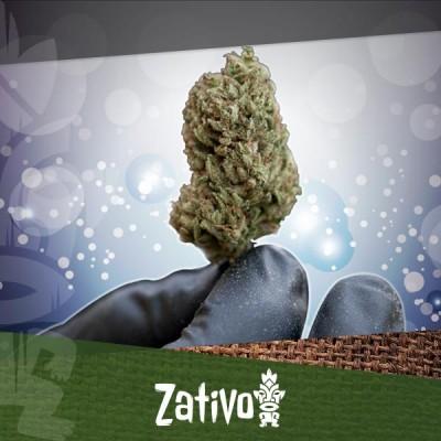 Les Meilleurs Moyens De Sécher Et D'Affiner Le Cannabis