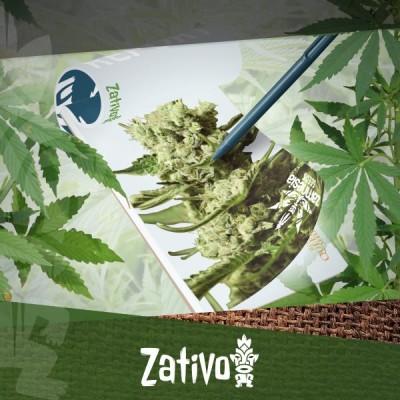 Rapport de culture : cultiver les nouvelles variétés de Zamnesia et Royal Queen Seeds