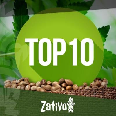 Top 10 des banques de graines de cannabis