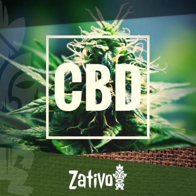 Les meilleures variétés de cannabis riches en CBD