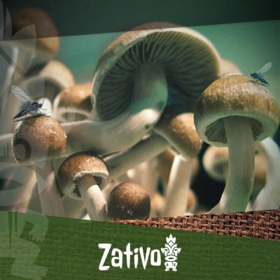 Identifier et prévenir la contamination des champignons