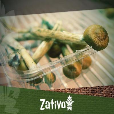 Les meilleurs façons de stocker vos champignons ou truffes magiques
