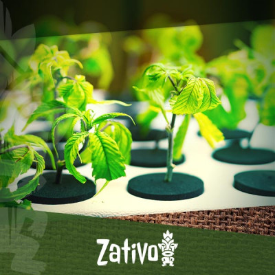Est-il Possible D'utiliser L'hydroponie Pour Cultiver Du Cannabis Bio ?