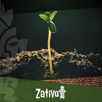 Comprendre La Porosité Des Sols Pour La Culture Du Cannabis