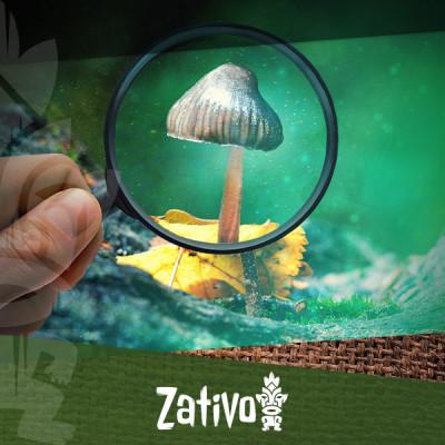 Guide Simple Pour Identifier Les Champignons Magiques Courants