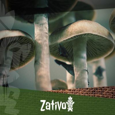 Comment prendre des champignons ou truffes magiques