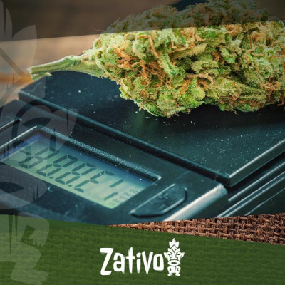 Comment Microdoser Le Cannabis